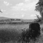 Der Alte Friedhof. Im Hintergrund erkennt man die Alleenstraße nach Bad Soden